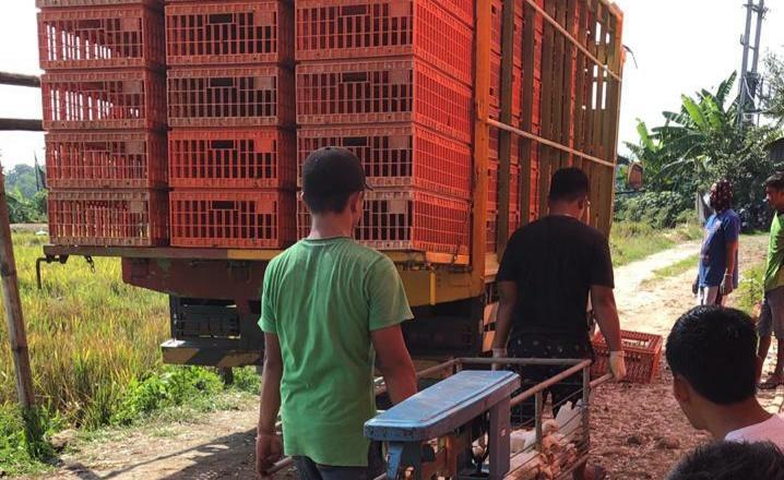 Peternak Mandiri Apresiasi Upaya Pembelian Ayam Hidup di 6 Propinsi