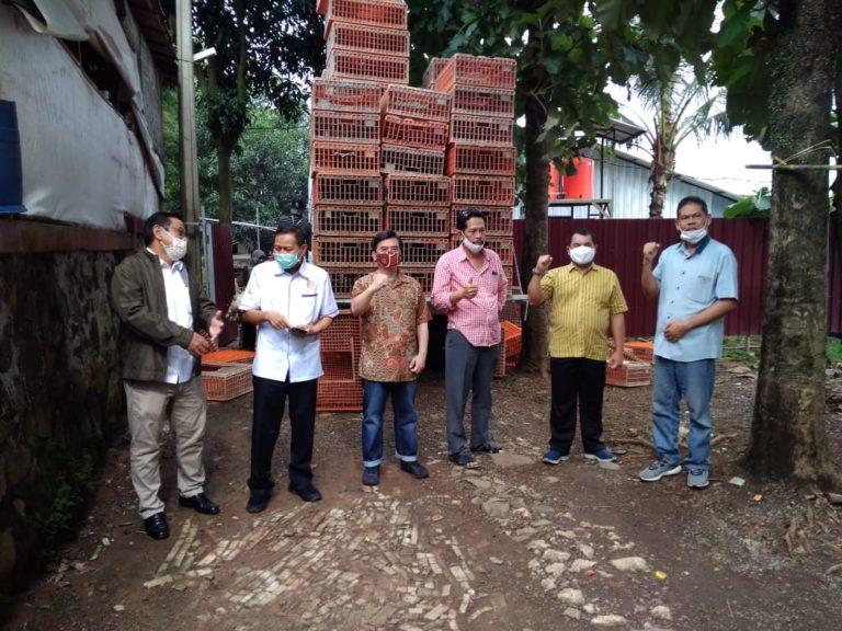 Kementan: 455.318 Ekor Ayam Peternak Mandiri telah dibeli Mitra Peternakan