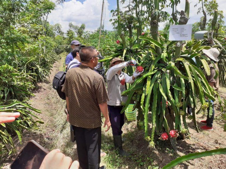 Berkah Petani Buah Naga Banyuwangi di Tengah Pandemi Covid 19