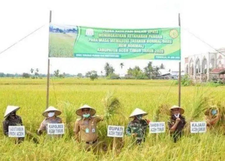 Bupati Aceh Timur: Tanam 2-3 Setahun, Pastikan Stok Pangan Aman