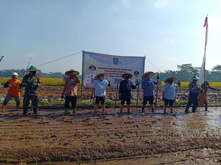 Petani Ngawi Lakukan Percepatan Tanam Padi untuk Antisipasi Ketersediaan Pangan