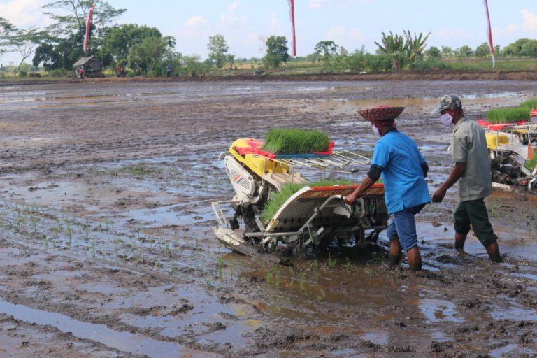 Kementan Bersama Kementerian Lain Kembangkan Food Estate di Kalteng