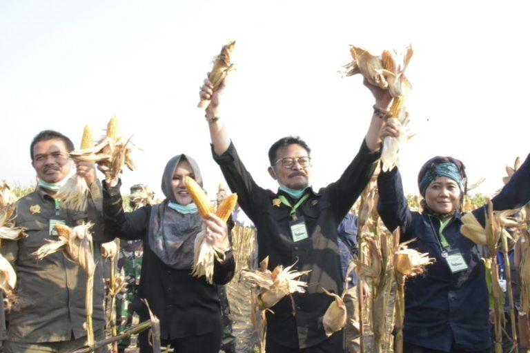 Kado HUT Kemerdekaan RI, Sektor Pertanian Tumbuh Paling Tinggi