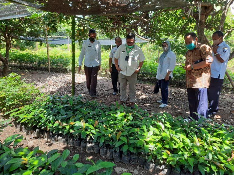 Benih Bermutu Jadi Kunci Utama Kerek Daya Saing Komoditas Hortikultura