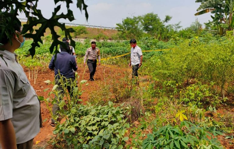 Mayat Tanpa Identitas di Kebun Singkong, Gegerkan Warga Limo Depok