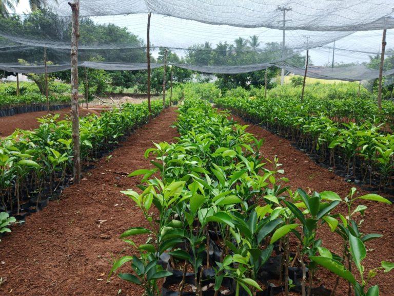 BBH Bengkulu Hasilkan Benih Hortikultura Berkualitas