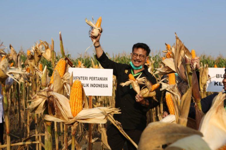 PDB Triwulan II 2020, Sektor Pertanian Tumbuh Paling Tinggi
