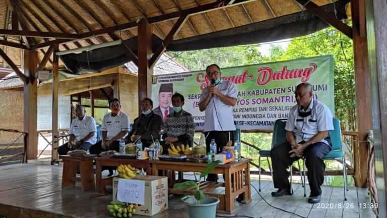 Sukabumi Targetkan Ekspor Pisang Bajo dalam Waktu Dekat