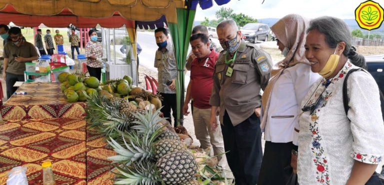 Nanas Pakpak, Ikon dari Ujung Barat Sumatera yang Siap Tembus Pasar Ekspor