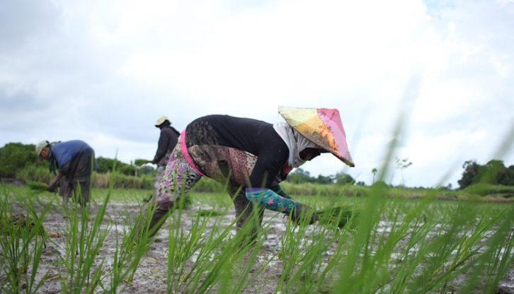 Berpotensi Hadapi Cuaca Ekstrim, Petani Makassar dan Gowa Diminta Jaga Lahan