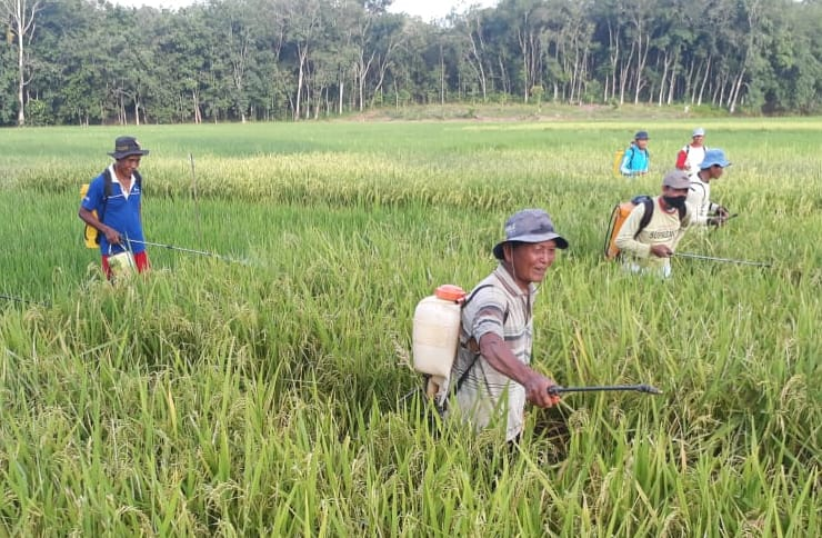 Kementan Dukung Pengendalian Hama Ramah Lingkungan dengan Agens Hayati