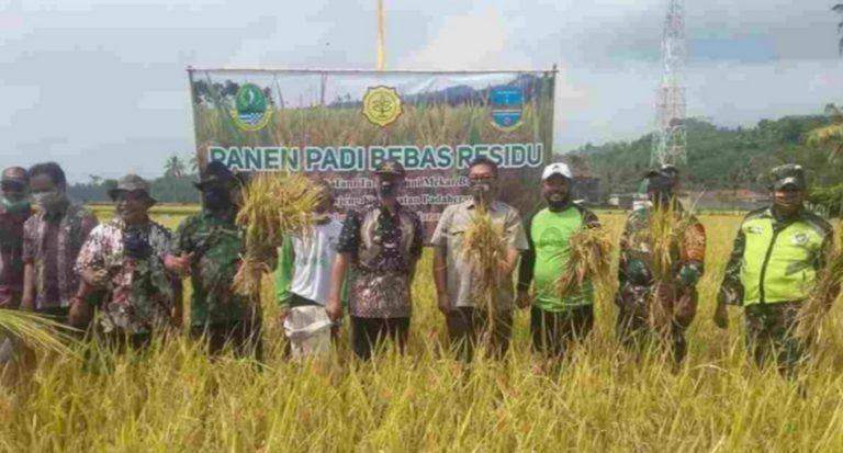 Petani Pangandaran Panen Padi Bebas Residu, Harga Lebih Menguntungkan