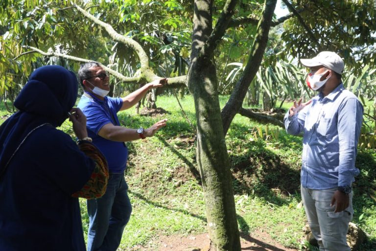 Wow! Warso Farm Siap Kembangkan 13 Hektar Lahan Buah Lokal
