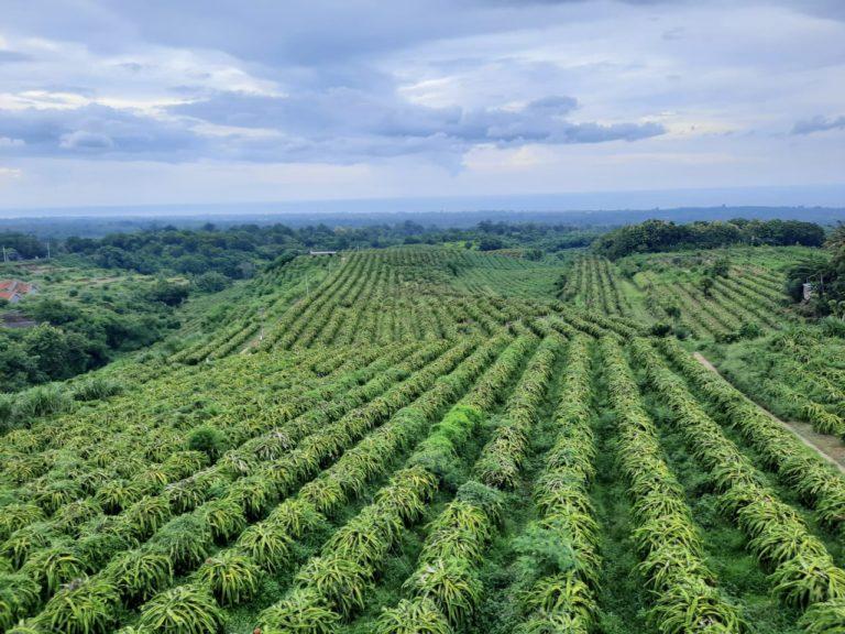 Horti Trade Room: Kemitraan Kementan dengan KBHI Dorong Penyerapan Produk Petani