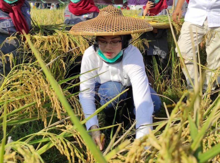 Hari Tani Nasional 2020, Bupati Purwakarta Apresiasi Terobosan Kementan