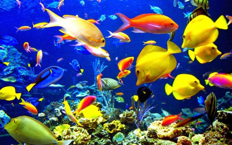 Sumbang Devisa Cukup Besar, Ini Strategi Kebijakan Pengembangan Ekonomi Ikan Hias