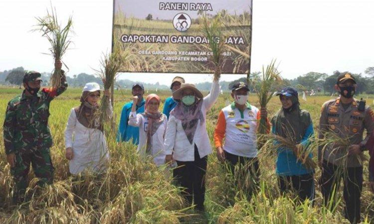 Petani Bogor Panen Padi Organik, Kementan Dorong Korporasi Pertanian