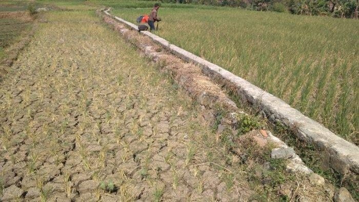 Antisipasi Kekeringan, Petani Kulonprogo Disarankan Ikut Asuransi