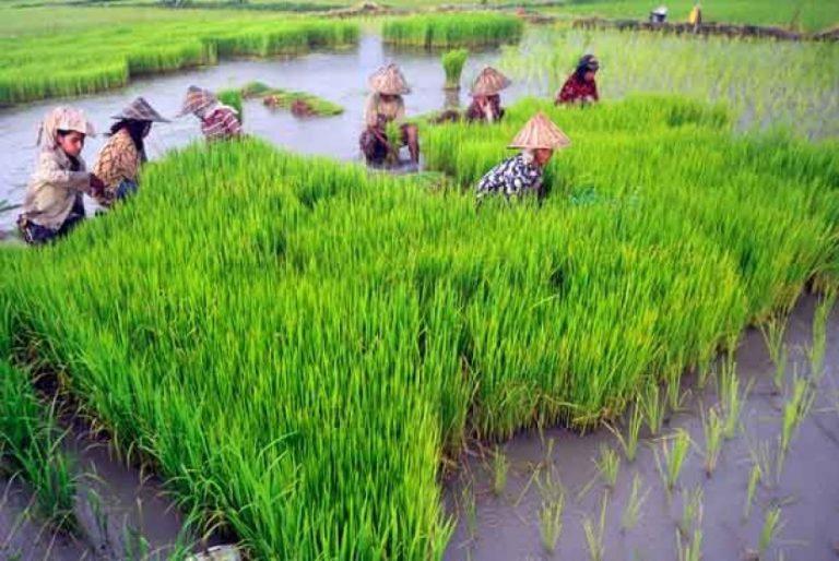 Webinar Indef, Sektor Pertanian Terbukti Dorong Percepatan Pemulihan Ekonomi Nasional