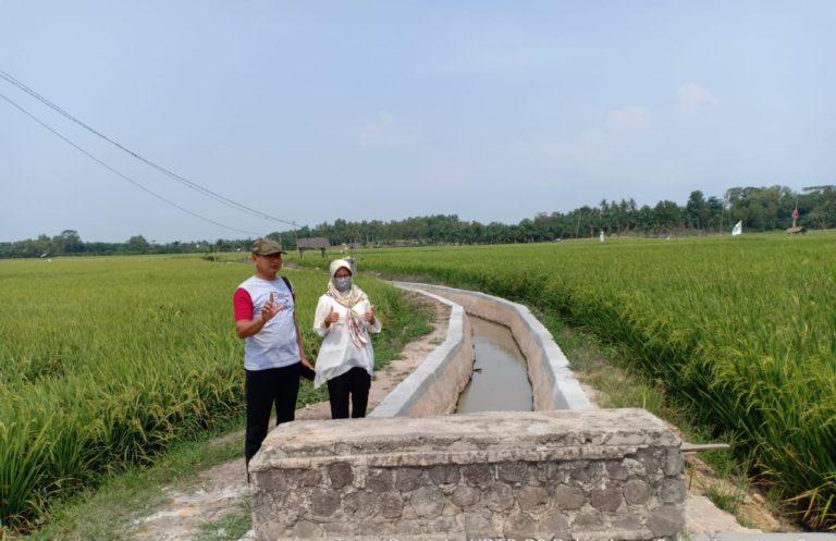 Dengan RJIT, Ditjen PSP Dukung Pertanian di Palas Lampung Selatan