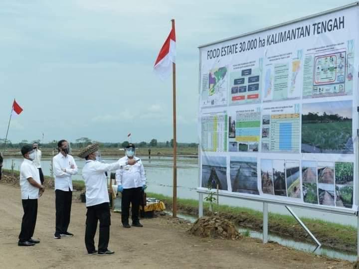 Rupiah Mengalir Kompetitif dari Program Food Estate di Kalteng