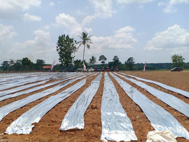 Didorong Irigasi Bertenaga Surya, Jadikan Lampung Sentra Cabai Ramah Lingkungan