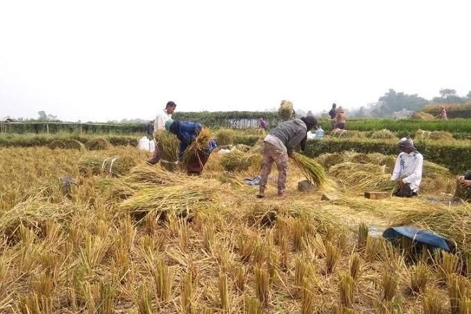 Bencana Alam Terjang Petani di Ciamis, Kementan Ingatkan Asuransi