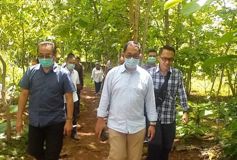 Penuhi Permintaan Industri, Kementan Dorong Investasi Jagung Rendah Aflatoksin di Gunung Kidul