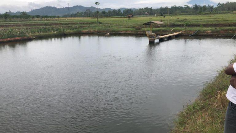 Embung Kementan Penuhi Kebutuhan Air untuk Pertanian di Pringsewu