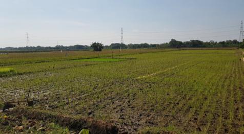 Asuransi Pertanian Bisa Jadi Solusi Buat Petani di Karo