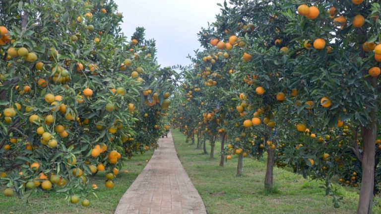 Integrasi TSP dan Agroeduwisata, Balitjestro:  Sejahterakan Petani, Topang Ekonomi Bangsa