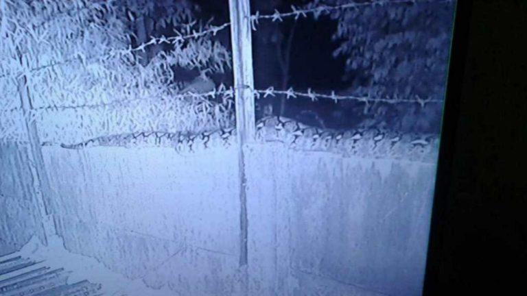 Terekam CCTV, Penampakan Ular Sanca Ukuran Besar di Depok Bikin Heboh