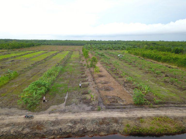 Proyek Kampung Buah di Sentra Kepulauan Borneo