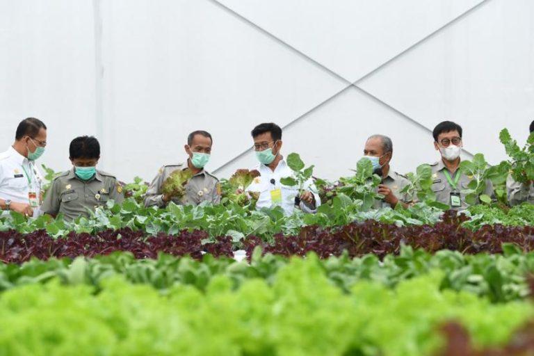 Peneliti UI: Sektor Pertanian Tidak Boleh Dipandang Sebelah Mata