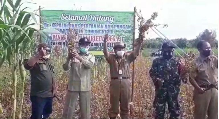 Dukung Kementan, Kabupaten Gunungkidul Targetkan Tanam Kedelai Varietas Unggul