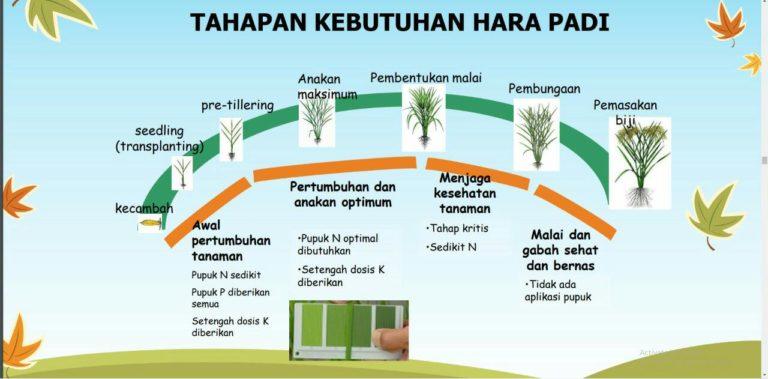 Pemupukan Berimbang Tingkatkan Produktivitas Pertanian