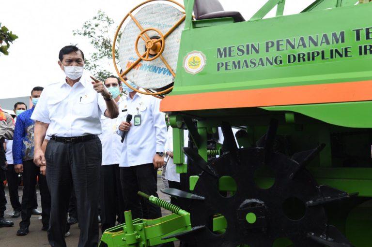 Luhut: Food Estate Kesempatan Emas Wujudkan Modernisasi Pertanian