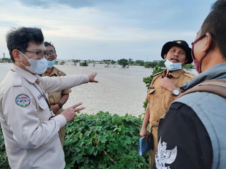 Ini Solusi Kementan Bagi Petani Terdampak Banjir di Pantura