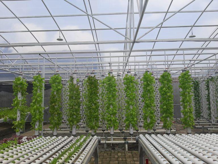 Kementan Dukung Budidaya Sayur Hidroponik di Cirebon sebagai Solusi Pertanian Lahan Sempit