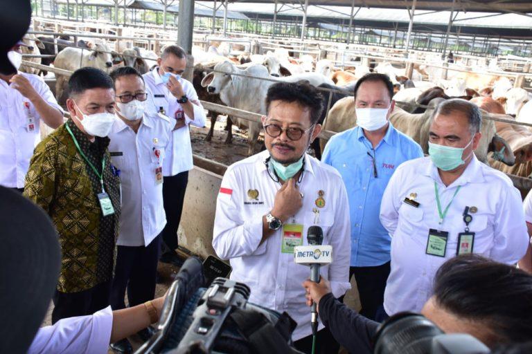 Mentan Pantau Ketersediaan Sapi Potong dan Daging Beku Jelang HKBN
