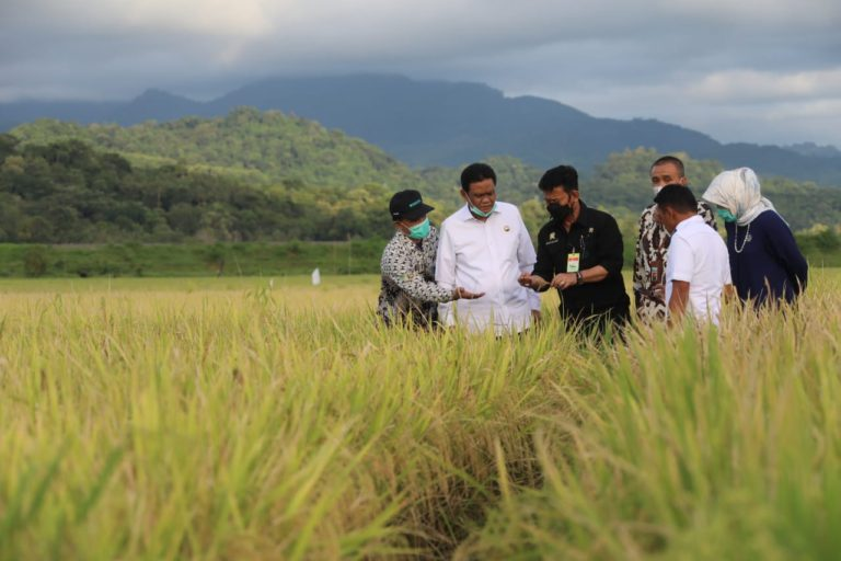 Mentan Dorong Kabupaten Barru Jadi Sentra Beras Nasional