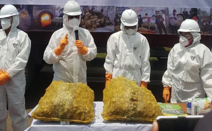 108 Ton Jahe Impor Tidak Penuhi Syarat Karantina Dimusnahkan