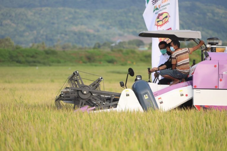 Panen di Jepara, Kostraling Kementan-Bulog Serap Gabah Petani 20.000 Ton
