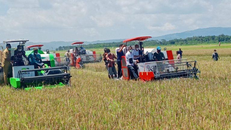 Panen Padi Di Lokasi Food Estate, Gubernur NTT BuktikanTerwujudnya Peradaban Baru