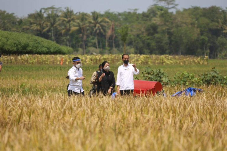 Jokowi Tinjau Panen Raya Padi di Malang