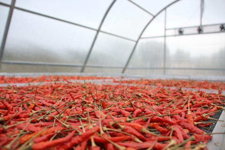 Solar Dryer Dome Tingkatkan Nilai Tambah Produk Hortikultura Petani