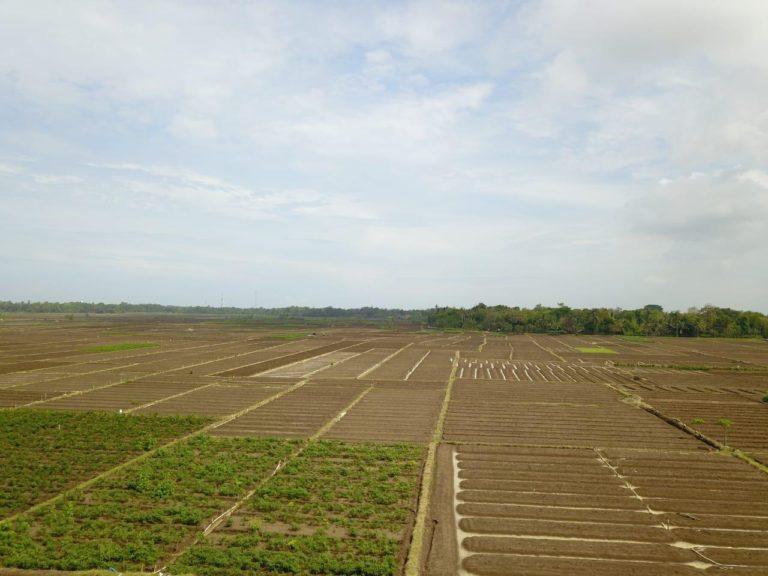 Kementan Akan kembali Bangun Food Estate Berbasis Hortikultura