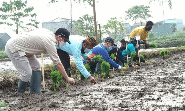 Tingkatkan Nilai Tambah dan Pendapatan Petani, Komisi IV DPR Tanam Padi Khusus di Lahan Terbatas