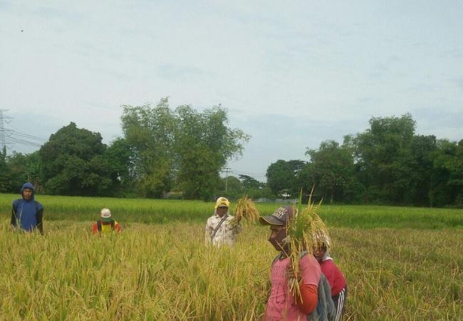 Program Makmur, Beri Solusi Tambahan Manfaat Bagi Petani