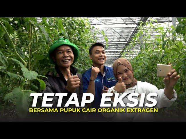 Pupuk Cair Organik ExtraGen, Kunci Sukses Petani Hortikultura Cianjur di Tengah Pandemi